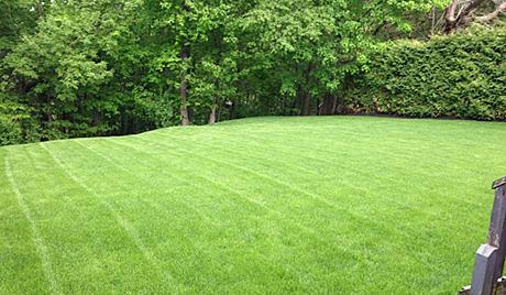 rainbow gardening landscape maintenance featured image